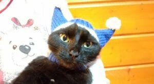 шапка для кошки для галереи