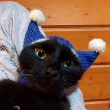 шапочка для кошки
