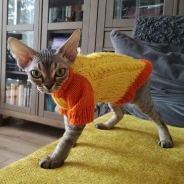 свитор для кошки