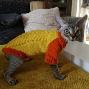 свиторок для кошки